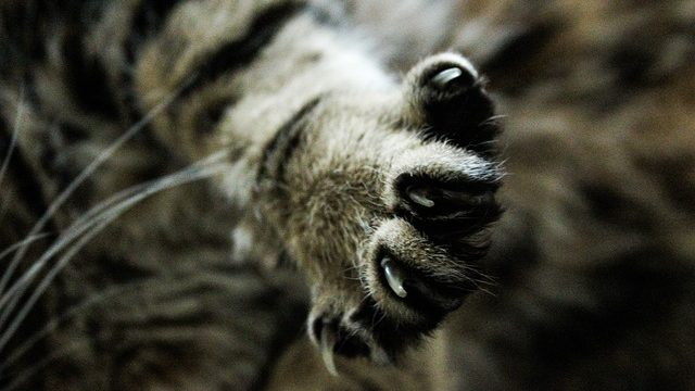 Take The Stress Out Of HOW TO TRIM CAT NAILS