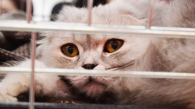 How To Calm an Anxious Cat: 7 Easy Ways