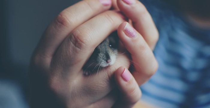 Having mice trouble? Why you need to get a cat