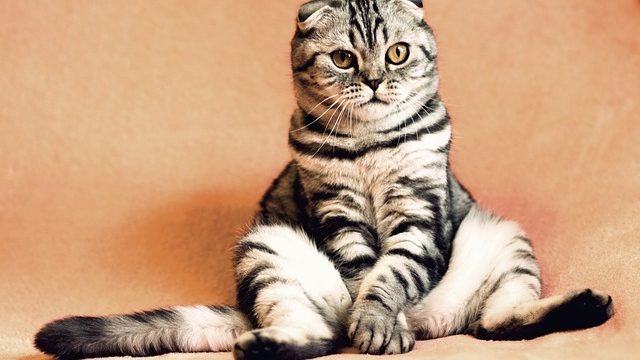 Reasons Behind Your Cat's Weird Behavior