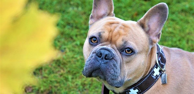 Should Dogs Wear Collars?
